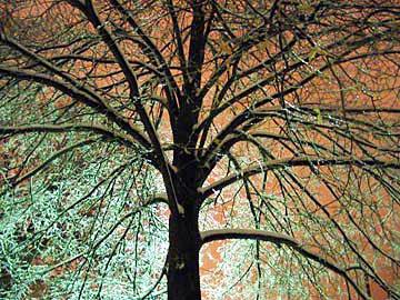 greenicetree.jpg